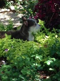 The garden protector